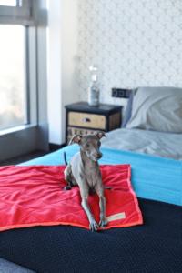 Kocyk dla psa royal czerowny niebieski