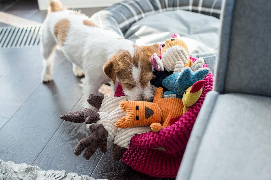 zabawka dla psa toffi felix duckie roy bax kosz na zabawki cotton pink bowl and bone republic ls1sa blog