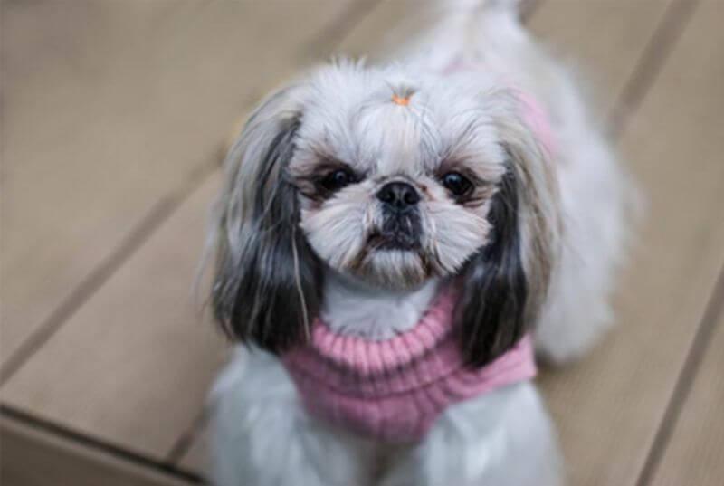 ubranko sweterek dla psa aspen pink rozowy bowl and bone republic ls6sa