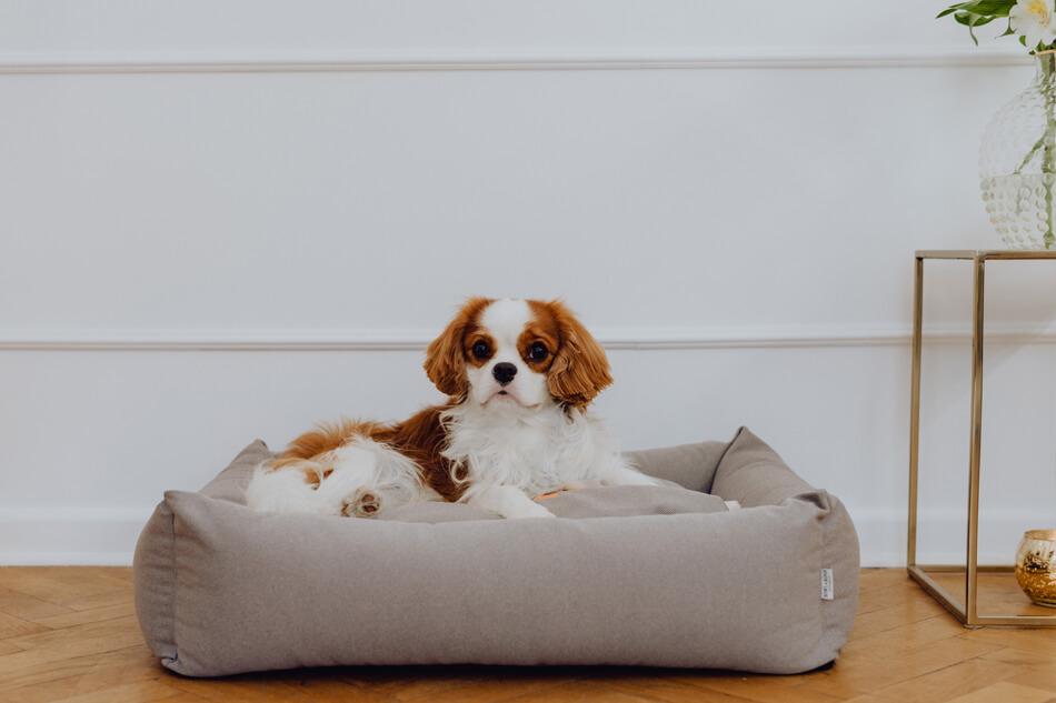 legowisko dla psa cosmopolitan platynowe bowlandbonerepublic ls1sa